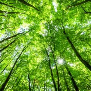 green initiatives header